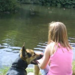 Lost dog on 20 Jun 2015 in Loughshinny, Dublin. Gonzo, a small dog that looks like German Shepherd.  Mostly black