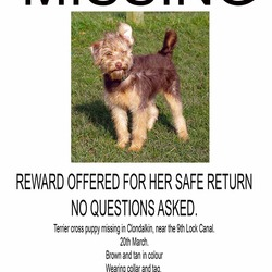 Lost dog on 20 Mar 2013 in Clondalkin. Terrier cross puppy missing/stolen from Clondalkin on Wednesday 20th March 2013. �500 cash reward for dog's safe return - no questions asked. 0857360806
