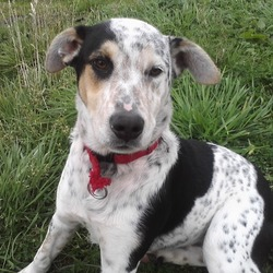 Lost dog on 20 Nov 2011 in Moylagh, Oldcastle Co. Meath. 1 year old white collie/lab mix with black patches, brown and black speckles on face.  Very friendly. Still hoping he will be returned to us :( If you see Jack please call Jennifer 086-0504700/ John 086-2463529 or  e-mail jenr1968@yahoo.com