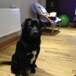 Lost dog on 20 Oct 2014 in kerry. missing since 11 Oct afternoon from the Cullen/ Rathmore area. He is a black male dog with white patch on his chest, he was wearing a black collier when he went missing. Thanks anita 087 6138861