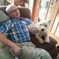 Lost dog on 20 Oct 2015 in Drombane, Tipperary. BUSTER, West Highland Terrier Last seen Tuesday 20th 21.00pm No collar, has been micro - chipped.