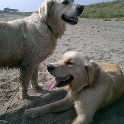 Lost dog on 20 Sep 2014 in Avoca, Co. Wicklow.