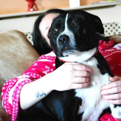 Lost dog on 21 Apr 2014 in jobstown tallaght. black/white female staffy missing jobstown tallaght red collar michrochipped