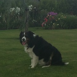 Lost dog on 21 Jan 2018 in POWERSCORT WATERFALL GOING DOWN DARGLE RIVER. BLACK AND WHITE COLLIE FELL INTO THE POWERSCORT RIVER.PLEASE CONTACT 0876687740 OR 0876189898
