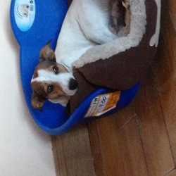 Lost dog on 21 Mar 2014 in Ballyfermot. Missing dog . Gone since 1pm yesterday 21/3/14 in ballyfermot area .goes by the name duke if anybody has seen or know where he might be can you please let us know . Contact num 0864163544 (glen)