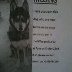 Lost dog on 22 Nov 2013 in Liffey Valley park Lucan. Black and white Husky 4 years old very friendly. Black mask white paws. white chest. brown eyes