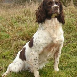 Lost dog on 22 Nov 2015 in Galway City. The Picture Shows a similar type of breed. ONLY,.