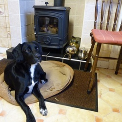 Lost dog on 22 Oct 2015 in Offaly. Missing: 3 year old female Labrador cross. Black with white markings.  Please phone PJ on 087-4162268 if you have any information at all.  Thank you.
