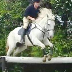 Lost dog on 22 Oct 2015 in Valleymount,Blessington, Co. Wicklow . STOLEN horse...****STOLEN**** from Valleymount,Blessington, Co. Wicklow -16.3 hand 5 point scar on the hind leg, all white, no markings gelding, 10 years old sport horse. Any information please email lost@dspca.ie for owners details. Thank you.