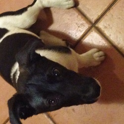 Lost dog on 22 Sep 2014 in Rahoon Rosg. Found Monday eve in the Rahoon area. Lovely male dog.