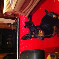Lost dog on 23 Dec 2012 in Slane co Meath . Went missing Sunday morning  23rd, in Slane co Meath area. Please call 083 3038811