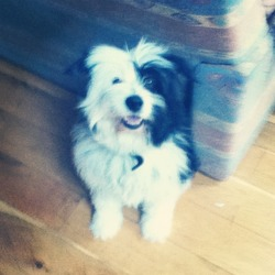 Lost dog on 23 Feb 2013 in Lucan. This is a recent photo but his hair is shorter now. He is very friendly and quiet. Responds to the name Cosmo.