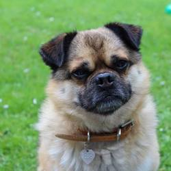 Lost dog on 23 Feb 2016 in foxrock . This is bobo. he went missing this morning on febuary 23rd 2016. He was last seen around foxrock village area. He is very friendly and any information that you might have please call 0833717095!!