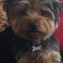 Lost dog on 23 Feb 2018 in Collins Park. lost....: Buster is missing from Father Collins Park up in Balgriffen/Clongriffen he's microchipped wearing a collar with owners details on tags and was wearing a High Viz vest when he went missing. Please contact 0863754349 or 0868037831 if found