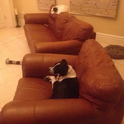 Lost dog on 23 Jan 2015 in Kinsale/Innishannon Cork. Black and white dog lost in Kinsale/Innishannon area Cork 23rd Jan 2015, known as Scottie. Call 0877184006