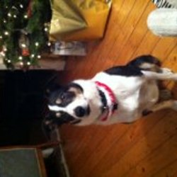 Lost dog on 23 Jul 2013 in dooega achill island. Hollie - Collie mix black collar  phone number on collar