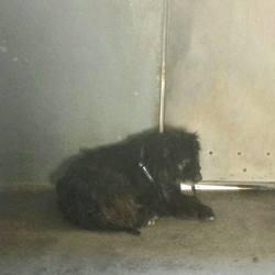 Lost dog on 23 Sep 2014 in athlone. found, now in mullingar dog pound...