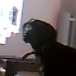 Lost dog on 24 Jan 2010 in galway. black labrador cross white breast   male
