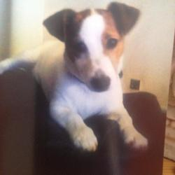 Lost dog on 24 Jul 2014 in drimnagh dublin 12. REUNITED 12/8/2014