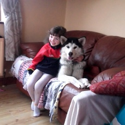 Lost dog on 24 Mar 2016 in mayo. 1 year old Grey Husky stolen from home in Ballindine area in Mayo. Name is Tyson.Male.Neuteured and microchipped.one blue eye one brown .friendly and loving.reward if found .0872827501