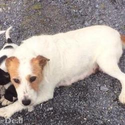 Lost dog on 24 Nov 2014 in galway. lost/stolen ...Missing terrier 6 years old a loved family pet sorely missed by my children she could be anywhere in Ireland if you see her please get in touch or if you are offered her for sale..http://www.donedeal.ie/lostandfound-for-sale/missing-terrier-reward-paid/8160384