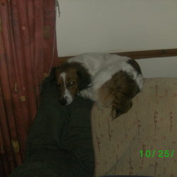 Lost dog on 20 Apr 2012 in Mayo. Extremely friendly small dog white and Brown in clour went missing in the Bekan, Claremorris area in CO.Mayo Please Call 086 107 8982 if any sign of him!