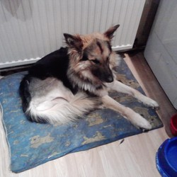 Lost dog on 25 Aug 2013 in Castle Park, (1-150) Near National Basketball Arena. Our Family pet has been missing since Sunday 25th August. He has not been home since. Last Seen in the Castle Park / Bancroft Area of Tallaght. He has a shaved     right back leg as he is only after an operation and needs medicine. Please Contact can be made to the vets in Tallaght area and myself thanks