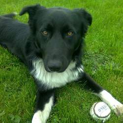 Lost dog on 25 Jul 2015 in Navan Meath. Missing - male, a collie/Labrador mix, medium height, black and white, 5 years old and very friendly. He has been missing since 25th of July and was last seen in the Boyerstown area of Meath. Please contact 085 718 5518 or 085 750 8318 with any information.Much appreciated