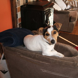 Lost dog on 25 Oct 2012 in Agher Summerhill Meath . Terrier Bitch