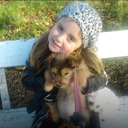 Lost dog on 26 Jul 2013 in Dublin7 . Honey coloured small terrier but has not got a terriers tail has a long brown tail  female her name is honey she is wearing a pink collar with diamonds she belongs to a four year old child