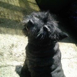 Lost dog on 26 Jul 2013 in Glasnevin/Finglas east. Zak - Elderly Cairn terrier, ver friendly. Missing from Glasnevin/Finglas East Area since Friday lunchtime. Last seen in Johnstown Park Friday afternoon but despite extensive search or area, Ashton Pound and Dogs Trust cannot find. Missed terribly. Any info please contact me 0872508544. Thanks