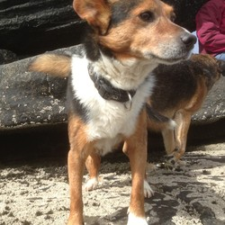 Lost dog on 26 Jun 2013 in Ballina Killaloe, County Tipperary. Small dog missing from Ballina/Killaloe County Tipperary sice Wednesday evening 26th. Could have been wandering around the car park on the Ballina side or perhaps he has wandered into one of the neighbouring estates.He is very friendly and could have got into someones car. TEL: 0871333080
