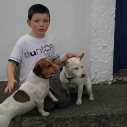 Lost dog on 26 May 2012 in CASTLERICKARD. Jack russell 