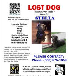 Lost dog on 26 Nov 2015 in Marshall WI. Female chocolate lab missing from a car accident on Thanksgiving. www.facebook.com/letsfindstella.