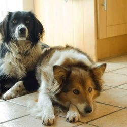 Lost dog on 26 Oct 2013 in Castlebar, Co. Mayo. Our two beloved dogs escaped last Saturday morning 26th October and have been missing since.