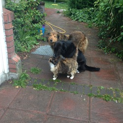 Lost dog on 26 Oct 2013 in Portmarnock. Collie dog. Has a collar with name Annie on it but wrong phone number. Please call me on 0879427835. Lost around Portmarnock