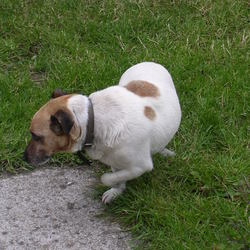 Lost dog on 26 Sep 2012 in Enfield. Reunited with owner today, Sam found by Sam!!