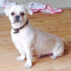 Lost dog on 26 Sep 2014 in Tallaght. 8 Year old Male Shih Tzu missing from St. Dominics / Avonbeg area of Tallaght since approx. 7pm Friday 26th Sep 2014. He has been groomed very recently so has very short hair and distinctive marks on back. Is wearing a dark brown collar. He is micro chipped but details are not up to date. If found please call Donna on 0874178453