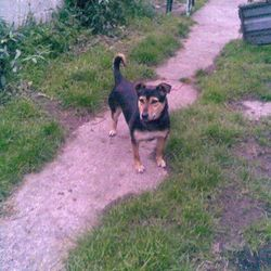 Lost dog on 26 Sep 2017 in navan. lost... missing yesterday from Connolly Ave in Navan. She has a black harness on her. My phone number is 086 386 1030, this is an old photo. If anyone sees her, please ring me. Thank you.
