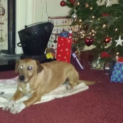 Lost dog on 27 Dec 2013 in enfield / jonstown bridge . Medium sized Irish terroir ginger in colour. White markings on his chest and his 2 front feet. Receiently groomed so hair is short last seen on m4 motorway near Johnstown bridge/Enfield Meath/Kildare border call Trevor 0857568887