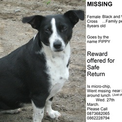 Lost dog on 27 Mar 2013 in Dublin. Black and White jack russel collie cross female dog. About 8years old. Went missing near Mountjoy Sq. North Dublin Wednesday lunch time 27/03 Please Contact 0862228794