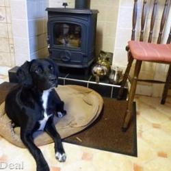 Lost dog on 27 Oct 2015 in Ferbane, Co. Offaly . lost...3 year old Labrador cross dog missing since Thursday 22nd October from Ferbane, Co. Offaly area. Black, with white markings. Please phone me on 087-4162268 if you have any information at all.