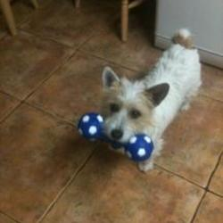 Lost dog on 27 Oct 2015 in mayo. lost Mayo...