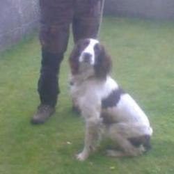 Lost dog on 27 Oct 2015 in  Newinn / Woodinstown area Co Tipperary. lost.. DOG MISSING from the Newinn / Woodinstown area Co Tipperary.