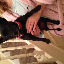 Lost dog on 27 Sep 2016 in Palmerstown Dublin 20. Small black female terrier mix, a little old, has a pink collar on her