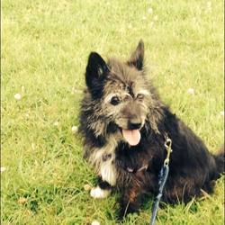 Lost dog on 28 Apr 2015 in Tallaght. Female Dog has gone missing. she was last spotted by the underpass of the M50 at Glenview in Tallaght she may have headed towards firhouse or spawell she had also been spotted at the National Basketball Arena possibly before this! If found could you please ring 0866666680