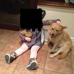 Lost dog on 28 Jan 2013 in clondalkin. male terrier cross ,light brown/sandy ,leather collar..with tag and number  very friendly