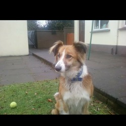 Lost dog on 28 Jan 2015 in glencree/ dublin mountains. Collie. Lassie colours but shortish hair. Lost near glencree on the 28th missy is her name. Shes chiped. With a black collar contact 012876079