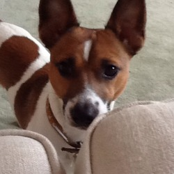Lost dog on 28 Jul 2013 in Foxford Co Mayo. Out dog went missing in foxford co mayo on the 28th of July. Generous reward if found. Please call mary on 0863797118