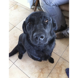 Lost dog on 28 Jul 2013 in Limerick. Ben has been found safe an well!